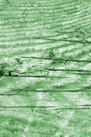knotting: Old Wood Green Grunge Texture. Stock Photo
