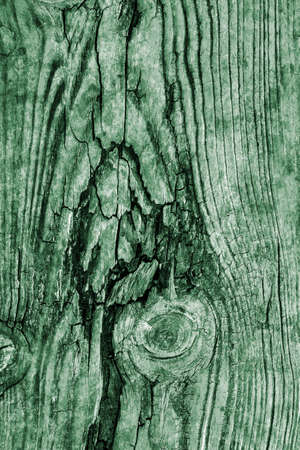 kelly: Old Wood Pale Green Grunge Texture. Stock Photo