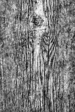 decomposition: Old Knotted Wood Weathered Rotten Cracked Bleached And Stained Gray Grunge Texture