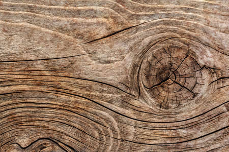 floorboard: Old Knotted Weathered Rotten Cracked Wooden Rustic Floorboard Coarse Grunge Texture