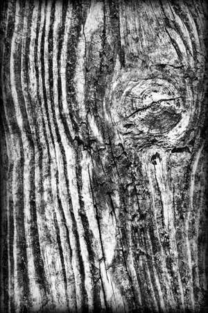 floorboard: Old Knotted Weathered Rotten Cracked Wooden Rustic Floorboard Coarse Gray Vignetted Grunge Texture Stock Photo