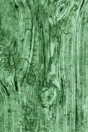 floorboard: Old Knotted Weathered Rotten Cracked Wooden Rustic Floorboard Coarse Kelly Green Grunge Texture