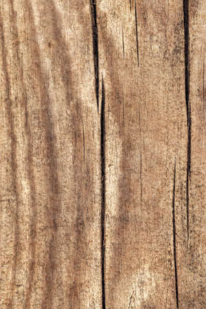 Old Weathered Knotted Cracked Pine Floorboard Texture Detail