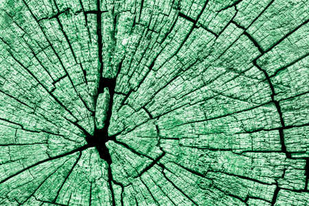 dilapidation: Old Weathered Cracked Rotten Stump Top Surface Kelly Green Grunge Texture Stock Photo