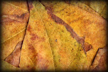 vignetted: Autumn Foliage Background Vignetted Grunge Texture