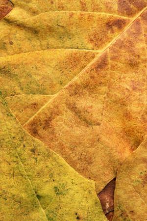 Autumn Dry Maple Foliage Grunge Background Texture Imagens