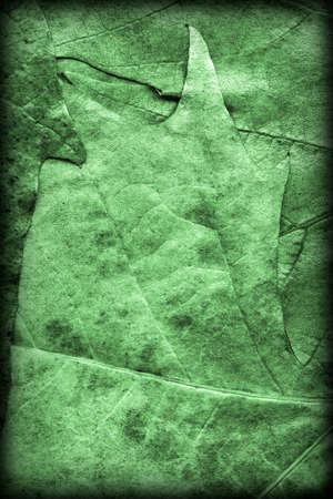 kelly: Kelly Green Autumn Dry Maple Foliage Grunge Background Texture