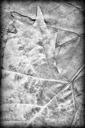 vignetted: Gray Autumn Dry Maple Foliage Vignetted Grunge Background Texture