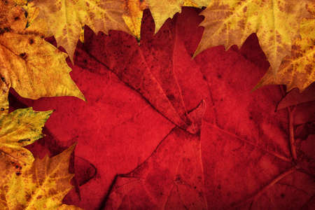 Dry Maple Leaves Border On Dark Red Background