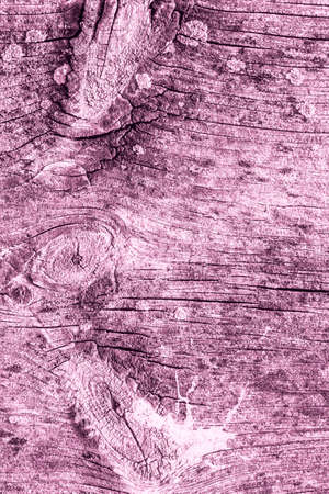 Magenta Old Weathered Cracked Knotted Pine Wood Floorboard Grunge Texture Detail Stock Photo