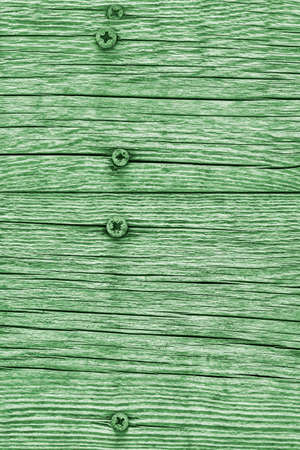 Green Old Weathered Cracked Knotted Pine Wood Floorboards With Rusty Phillips Screws Embedded Detail