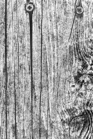 Mid Gray Old Weathered Cracked Knotted Pine Wood Floorboards With Rusty Phillips Screws Embedded Detail
