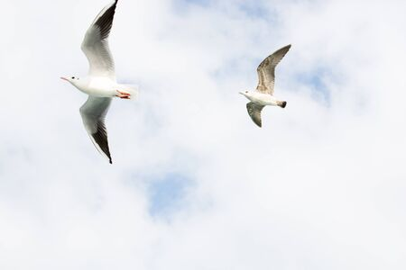 the seagulls: Seagulls flying in sky
