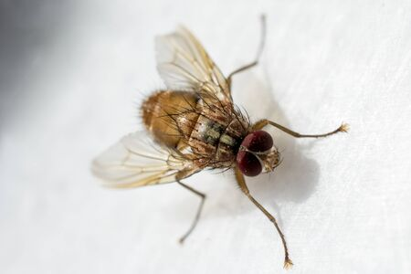 hideout: Fly  feeds on flowers in the nature Stock Photo
