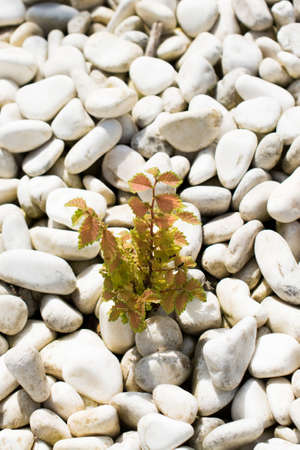 consist: Background consist of full of little white pebbles Stock Photo