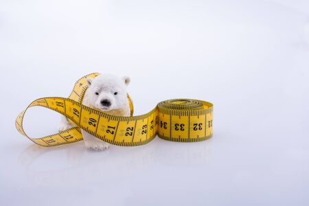 Polar bear surrounded by Measuring tape on a white background Stock Photo