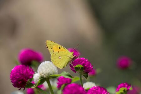 Beautiful butterfly perching on flower on nature background