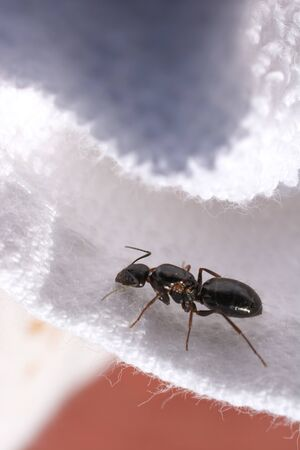 Ant walk on white color fabric