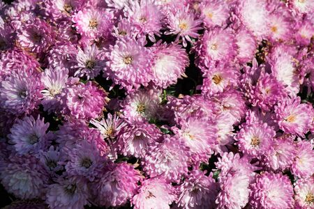 blume: Beautiful fresh flowers as a nature background Stock Photo