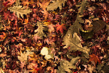 hojas secas: Beautiful dry leaves as an autumn background