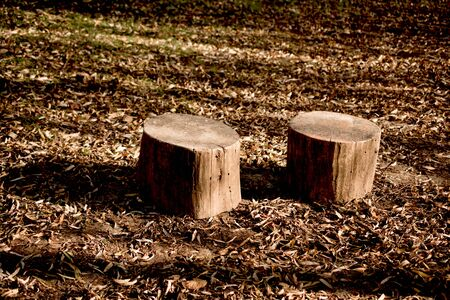 removals: Cut tree stump view in the Autumn season