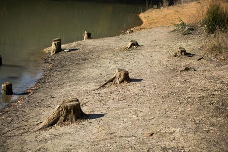removals: Cut tree stump view by the lake in the Autumn season