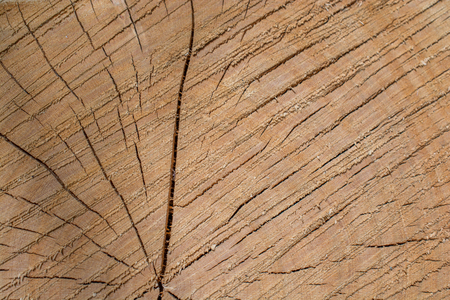 removals: Cut tree stump surface as a background texture Stock Photo