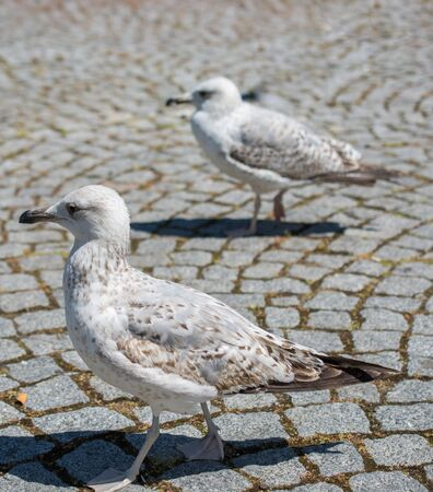 Single seagull in the street as a background Stock Photo - 85751490