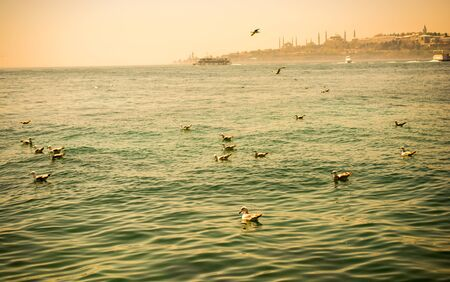 Seagull are in water of the sea Stock Photo - 85804207