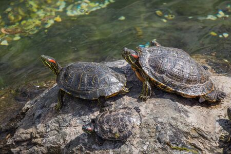 Lonely turtles found by the lake