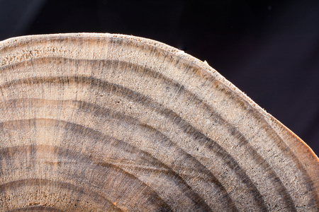 small piece of cut wood logs used for  wood texture background
