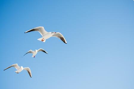 Na tle nieba latają mewy Zdjęcie Seryjne