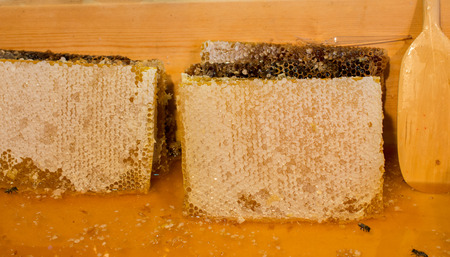 Sweet fresh honey in the sealed comb frame