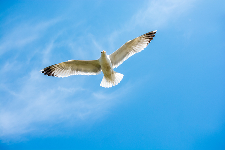 Single seagull flying in a cloudy sky as a background