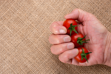 Bunch of red ripe tasty cherry tomatos in hand Stock Photo