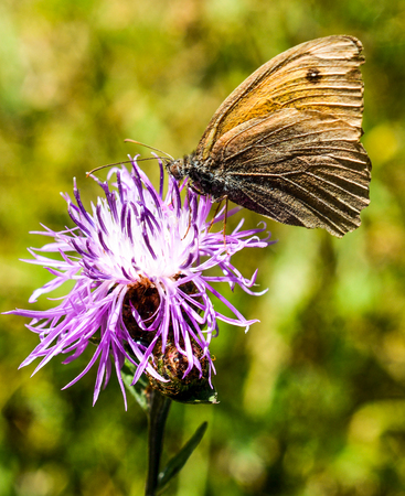 Beautiful butterfly land colorful on flower in nature