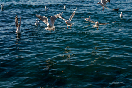 Seagulls are flying in the sky over sea waters