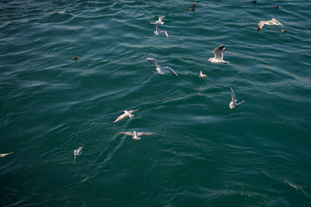 Seagulls are on and  over the sea waters Stock Photo