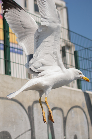 Single seagull over the roof of a building