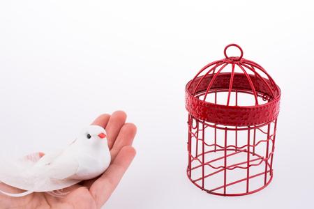 Bird near a red birdcage