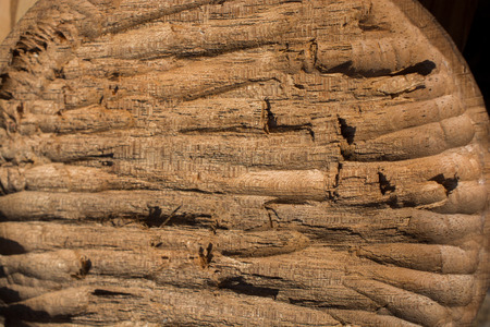 carving Wood with texture and natural patterns as a background
