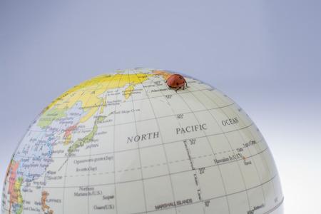 Ladybug walking on a little colorful model globe Фото со стока