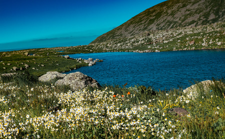 Blooming beautiful wild flowers by the pond in Artvin highland 写真素材