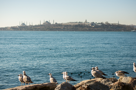 Seagulls are on the rock by the sea waters in Istanbul