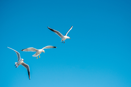 Seagulls are  flying in the sky background