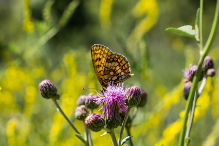 Butterfly feeding on a flower  in nature Imagens