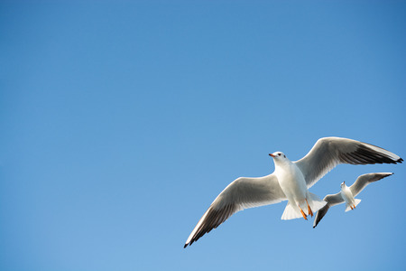 Seagulls are  flying in the sky