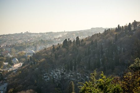 Forest view from Golden Horn in the view