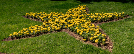 Yellow flowers forming a five pointed star on display