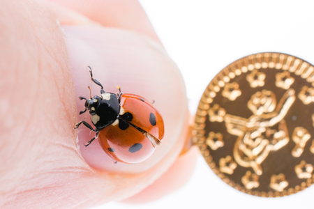 Beautiful photo of red ladybug walking on a fake coins Stock Photo